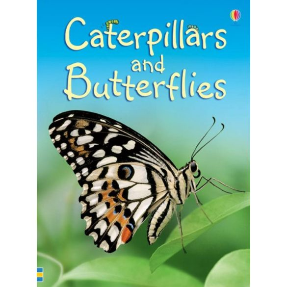 Beginners - Caterpillars and butterflies