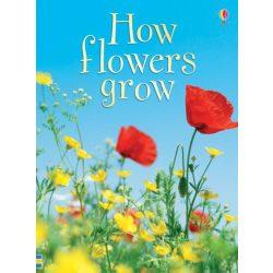 Beginners - How flowers grow