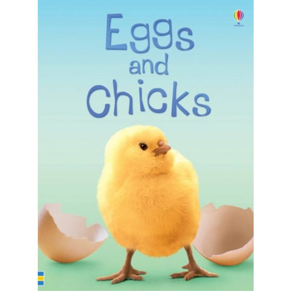 Beginners: Eggs and Chicks