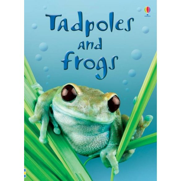 Beginners - Tadpoles and frogs