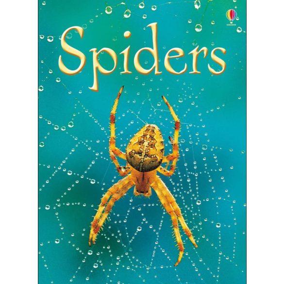 Beginners - Spiders