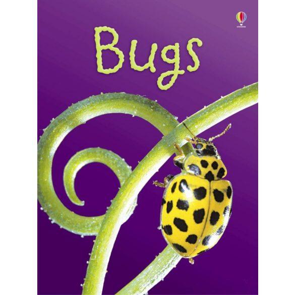 Beginners - Bugs