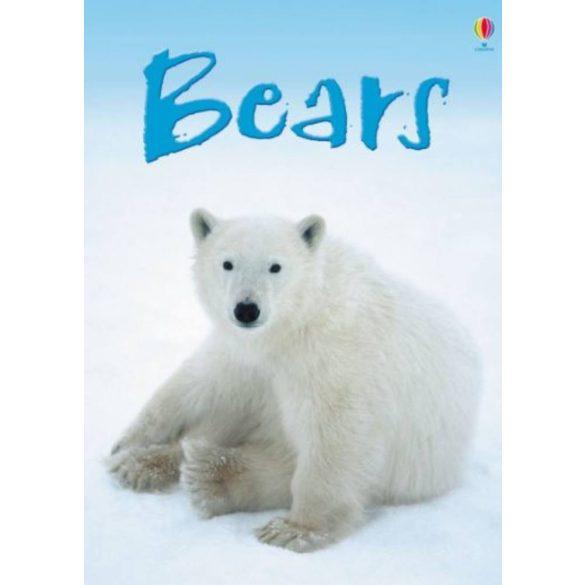 Beginners – Bears