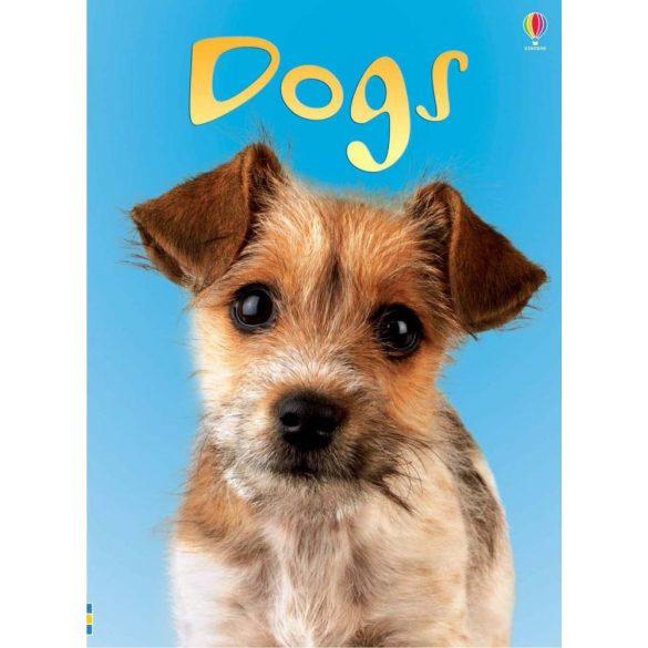 Beginners - Dogs