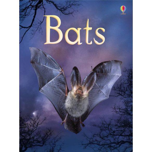 Beginners - Bats