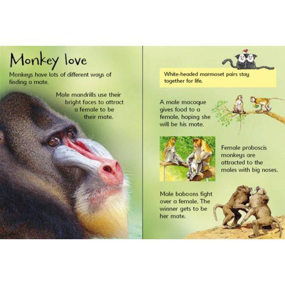 Beginners - Monkeys