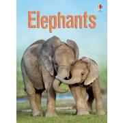 Beginners - Elephants