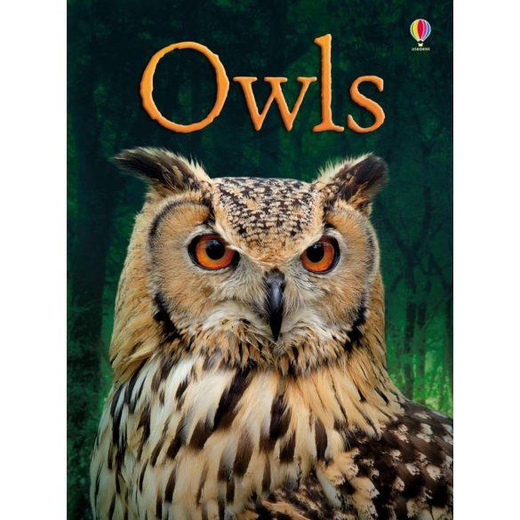 Beginners - Owls
