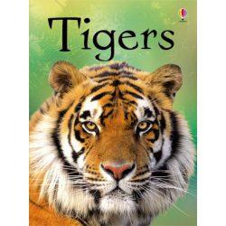 Beginners - Tigers