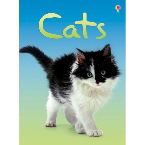 Beginners - Cats