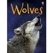 Beginners - Wolves