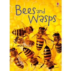 Beginners - Bees and wasps