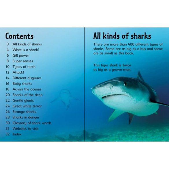 Beginners - Sharks
