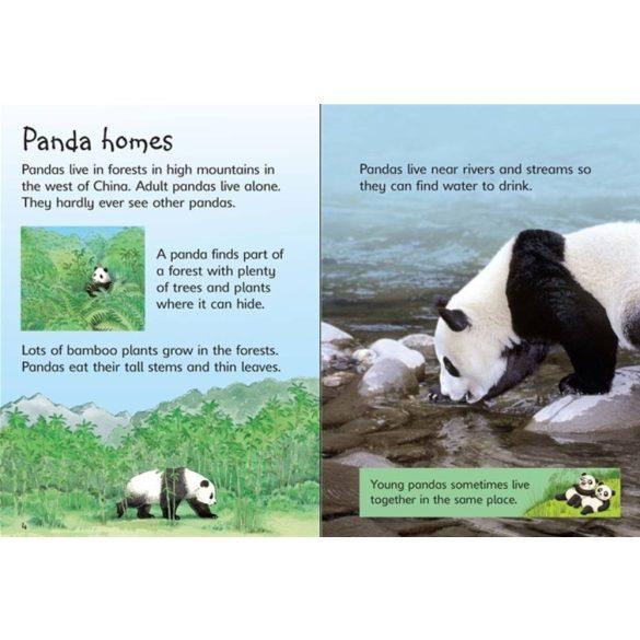 Beginners: Pandas