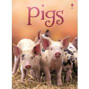 Beginners - Pigs