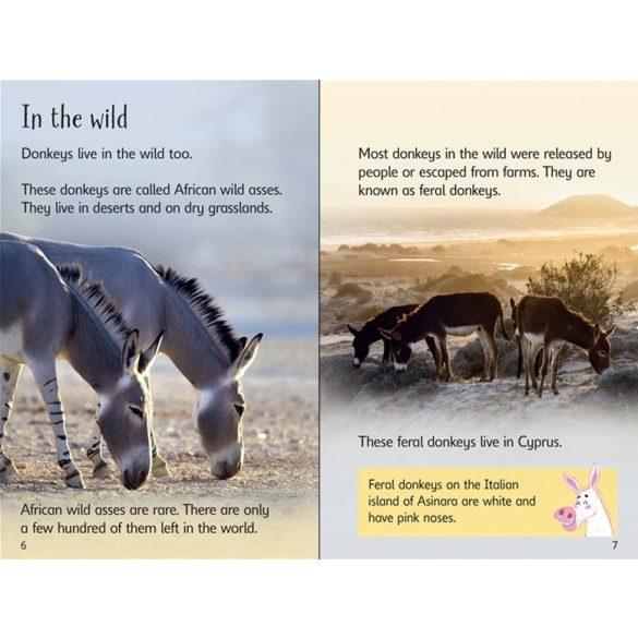 Beginners - Donkeys