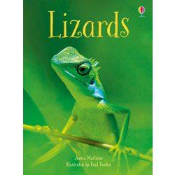 Beginners - Lizards