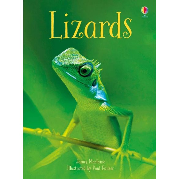 Beginners - Lizards