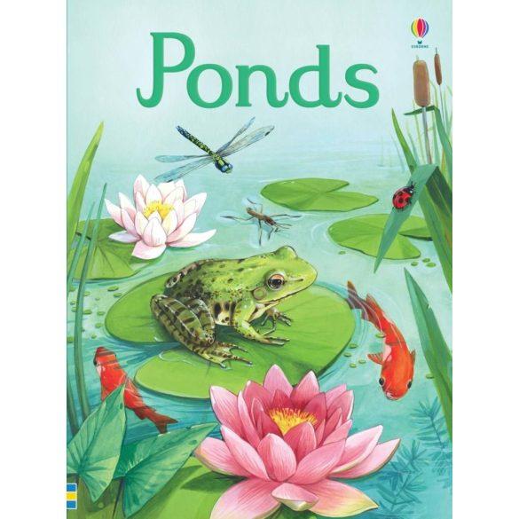 Beginners - Ponds